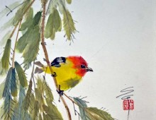 Little Tanager