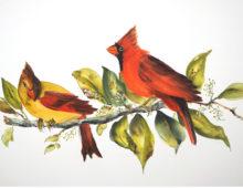 Cardinal Mates