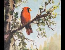 Cardinal Knowledge